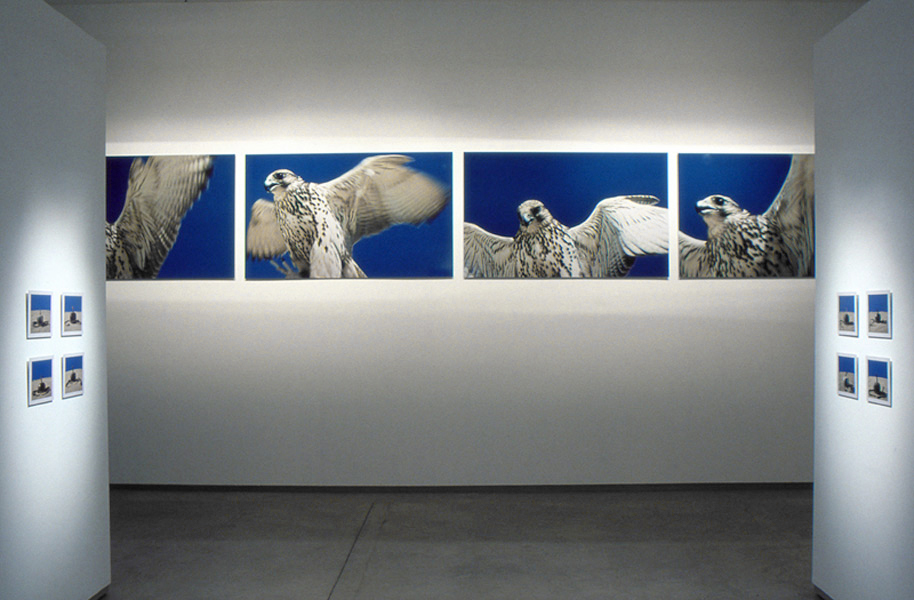 Lynne Roberts-Goodwin: 9 [gallery view] azure series Australian Centre for Photography_Gallery installation